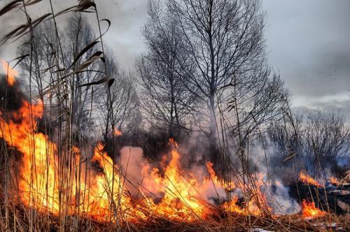 razno 26.03.12. pozar, ogenj, trava, gozd, gmajna, gori foto: shutterstock